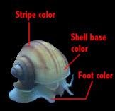 color_diagram